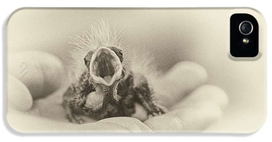 Baby Bird IPhone 5 Case featuring the photograph Greed by Caitlyn Grasso