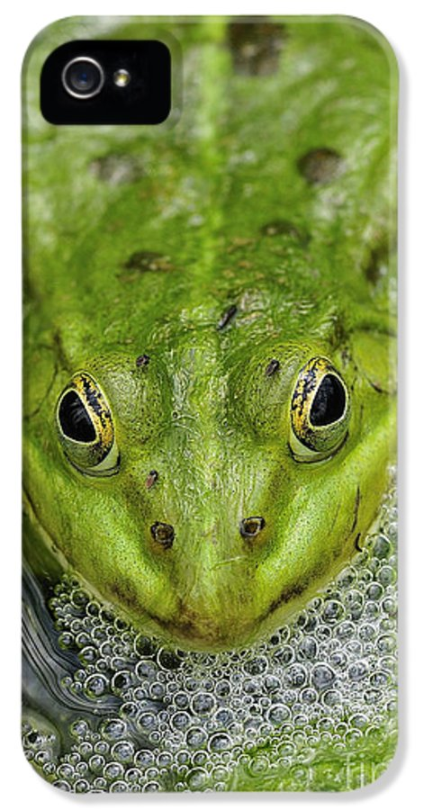 Frog IPhone 5 Case featuring the photograph Green Frog by Matthias Hauser