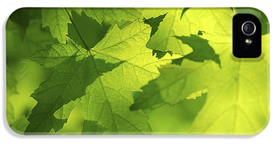 Leaf IPhone 5 Case featuring the photograph Green Maple Leaves by Elena Elisseeva
