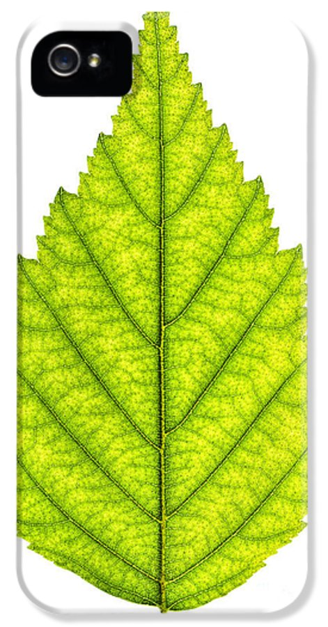 Green IPhone 5 / 5s Case featuring the photograph Green Tree Leaf by Elena Elisseeva
