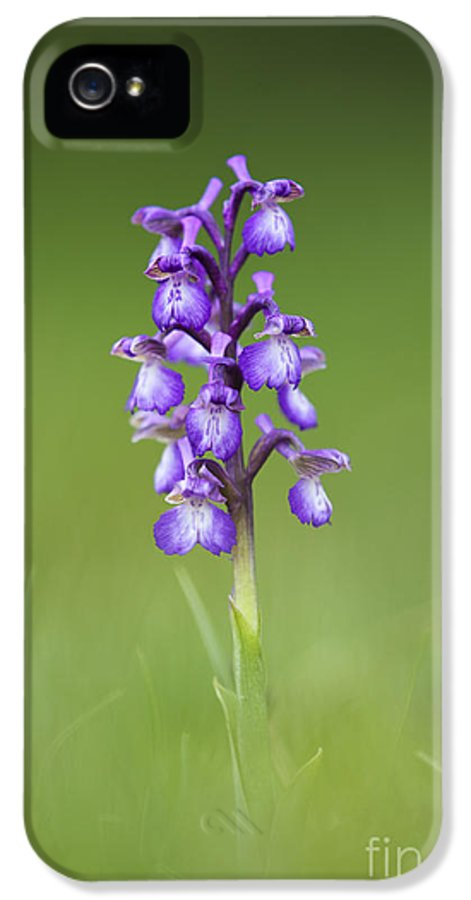 Green Winged Orchid IPhone 5 Case featuring the photograph Green Winged Orchid by Tim Gainey