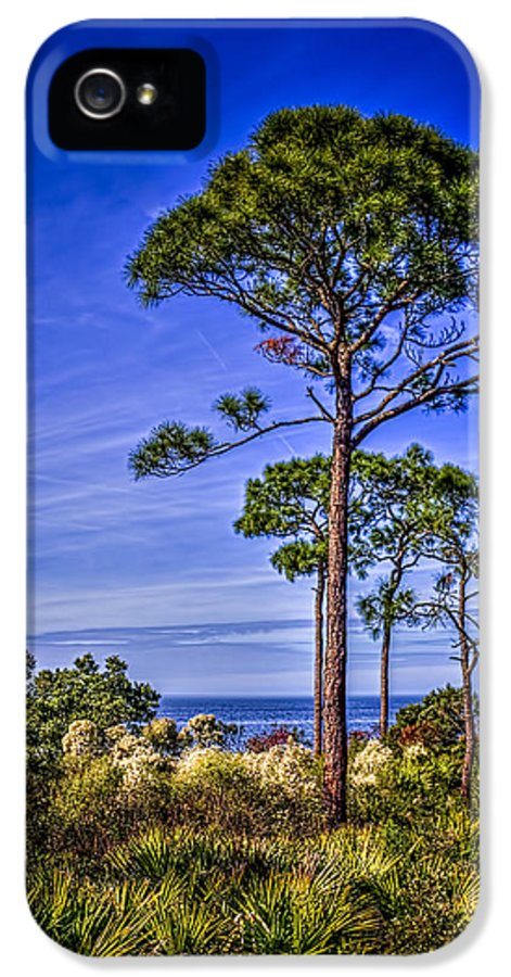 Pine Trees IPhone 5 Case featuring the photograph Gulf Pines by Marvin Spates