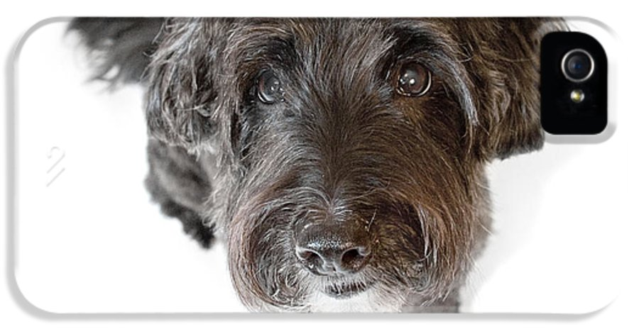 Dog IPhone 5 Case featuring the photograph Hairy Dog Photographic Caricature by Natalie Kinnear