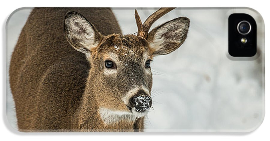 Deer IPhone 5 Case featuring the photograph Half Rack by Paul Freidlund
