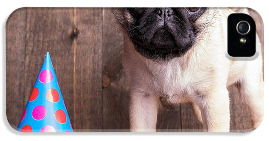 Dog IPhone 5 Case featuring the photograph Happy Birthday Cute Pug Puppy by Edward Fielding