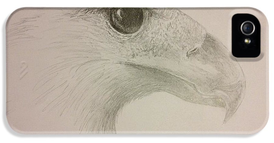 Harpy Eagle IPhone 5 Case featuring the drawing Harpy Eagle Study by K Simmons Luna