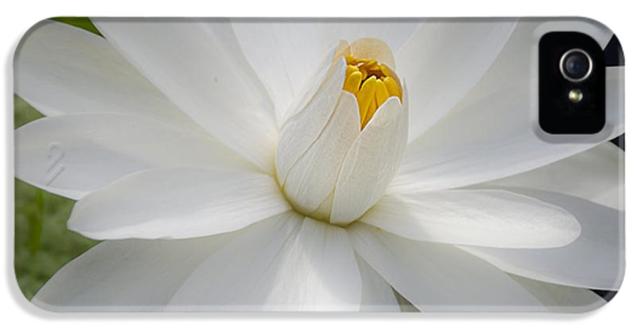White Water Lily IPhone 5 Case featuring the photograph Heavenly Aquatic Bloom by Julie Palencia