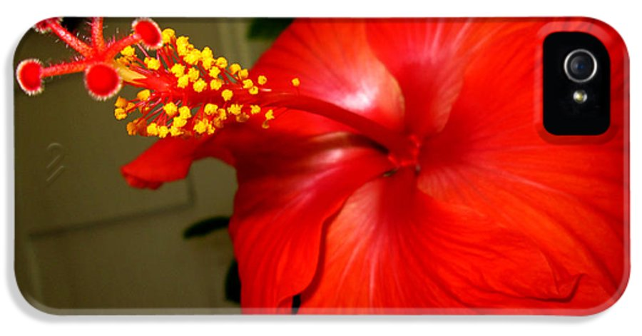 Flowers IPhone 5 / 5s Case featuring the pyrography Hibiscus 12 by M Landis