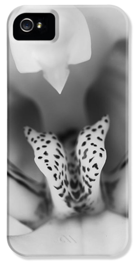 3scape Photos IPhone 5 Case featuring the photograph High Key Orchid by Adam Romanowicz