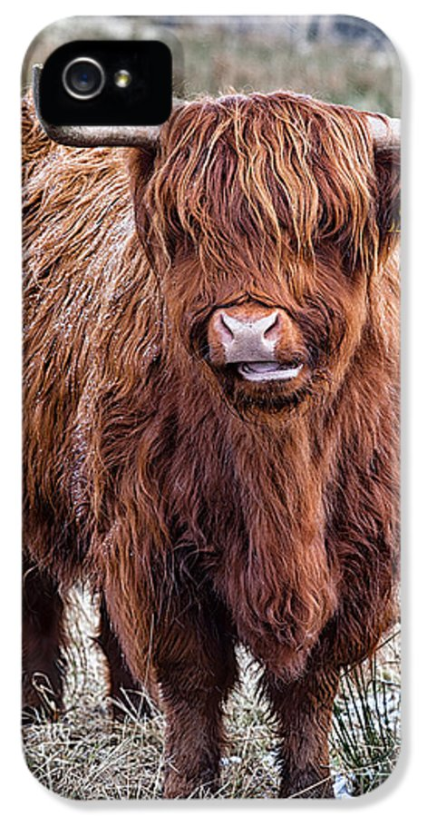 Highland Cow IPhone 5 Case featuring the photograph Highland Coo by John Farnan