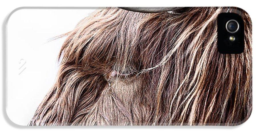 Highland Cow Scotland IPhone 5 Case featuring the photograph Highland Cow Color by John Farnan