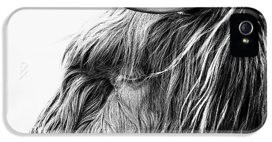 Highland Cow Scotland IPhone 5 Case featuring the photograph Highland Cow Mono by John Farnan