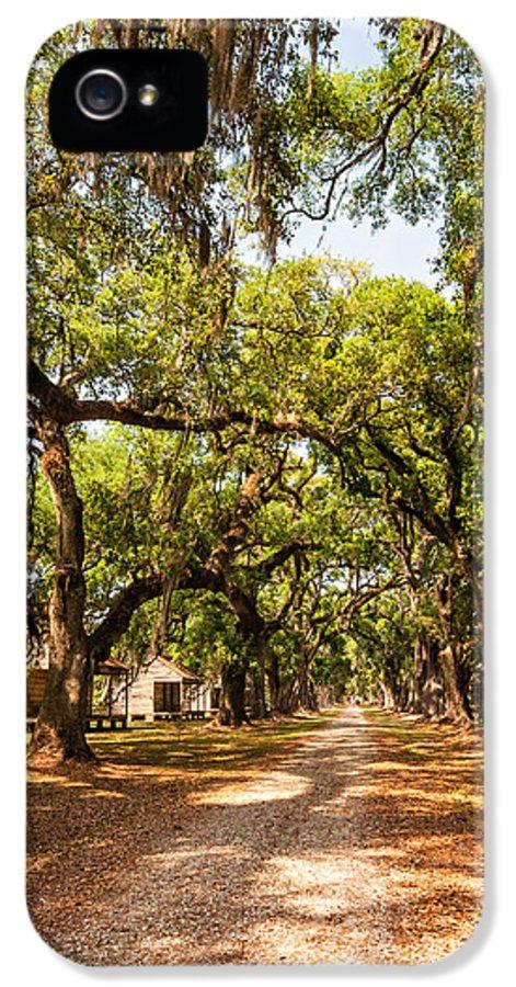 Evergreen Plantation IPhone 5 Case featuring the photograph Historic Lane by Steve Harrington
