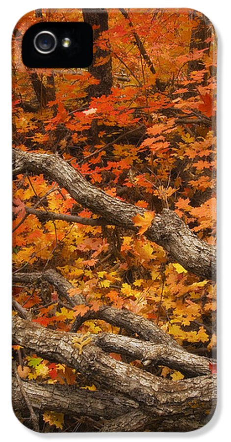 West Fork Oak Creek Canyon IPhone 5 Case featuring the photograph Holding Back by Peter Coskun