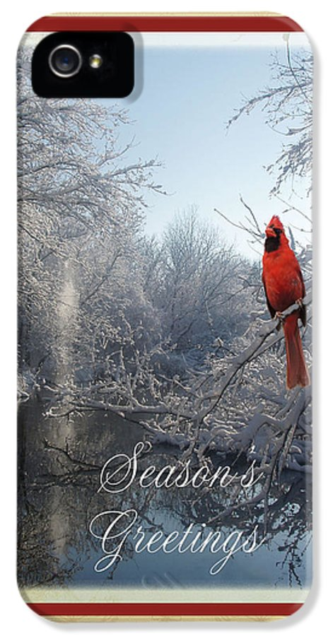 Winter IPhone 5 Case featuring the photograph Holiday Season 2013 by Teresa Schomig