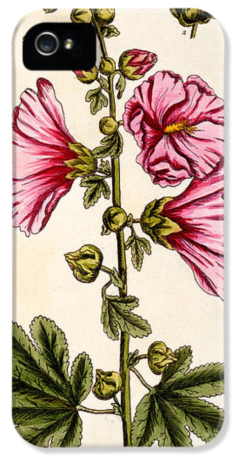 Still-life IPhone 5 Case featuring the painting Hollyhocks by Elizabeth Blackwell