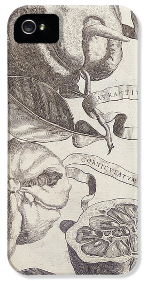 Pencil IPhone 5 Case featuring the painting Horned Orange by Cornelis Bloemaert