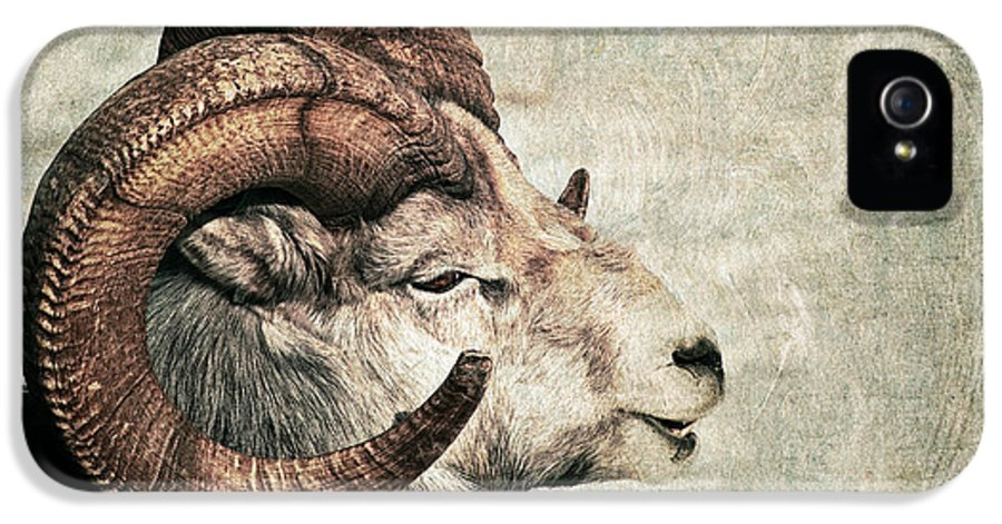 Dall's Sheep IPhone 5 Case featuring the photograph Horned by Priska Wettstein