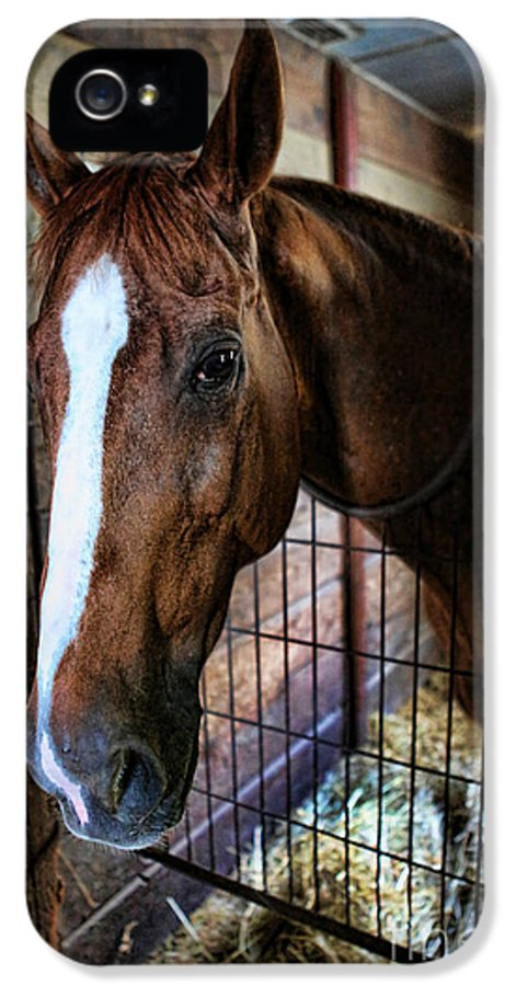 Kentucky Derby IPhone 5 Case featuring the photograph Horse In A Box Stall - Horse Stable by Lee Dos Santos