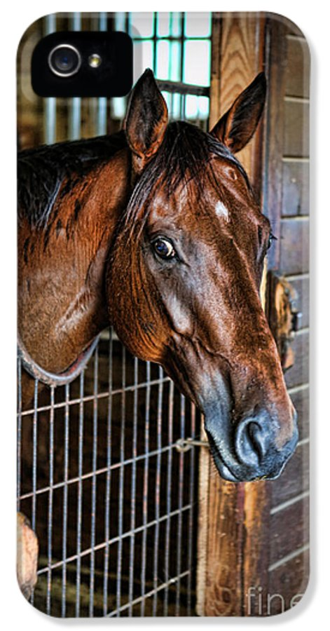 Kentucky Derby IPhone 5 Case featuring the photograph Horse In A Box Stall II - Horse Stable by Lee Dos Santos