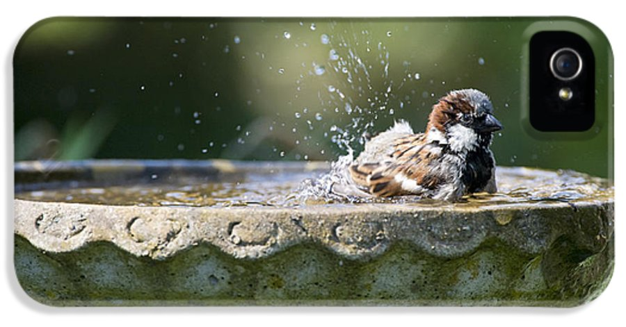 House Sparrows Sparrows IPhone 5 Case featuring the photograph House Sparrow Washing by Tim Gainey