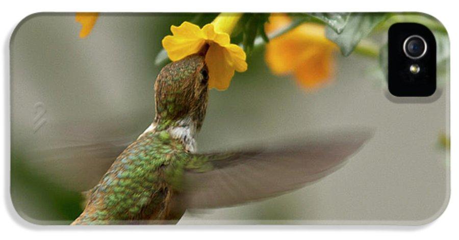 Bird IPhone 5 Case featuring the photograph Hummingbird Sips Nectar by Heiko Koehrer-Wagner