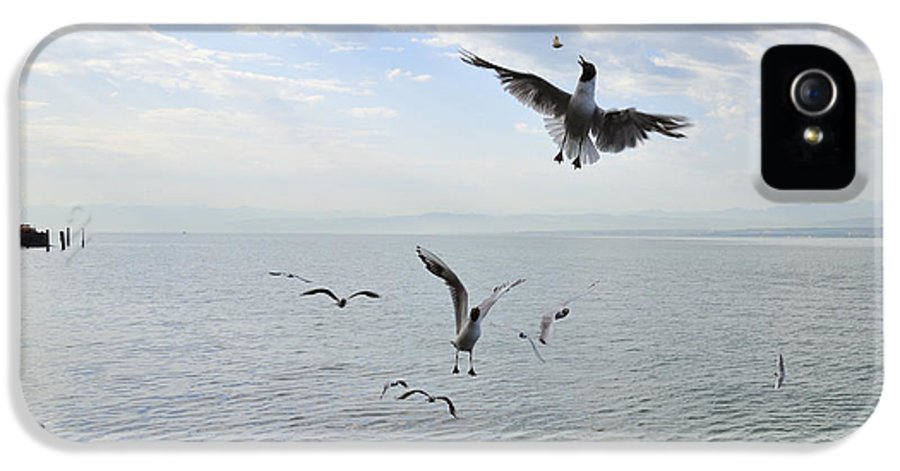 Seagulls IPhone 5 Case featuring the photograph Hungry Seagulls Flying In The Air by Matthias Hauser