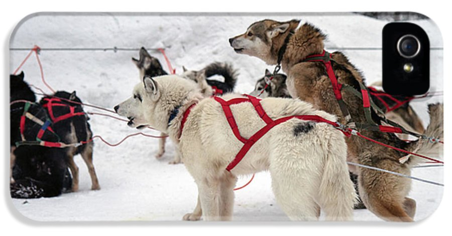 Arctic IPhone 5 Case featuring the photograph Husky Dogs Pull A Sledge by Lilach Weiss