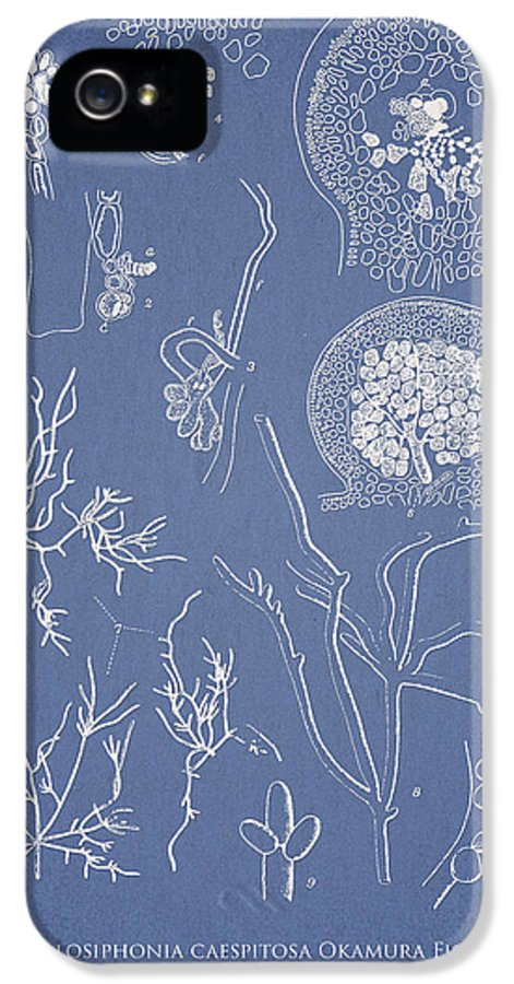 Algae IPhone 5 Case featuring the digital art Hyalosiphonia Caespitosa Okamura Valonia Confervoides by Aged Pixel