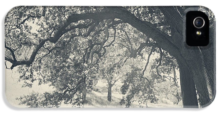 Mt. Diablo State Park IPhone 5 Case featuring the photograph I Would Wrap My Arms Around You by Laurie Search