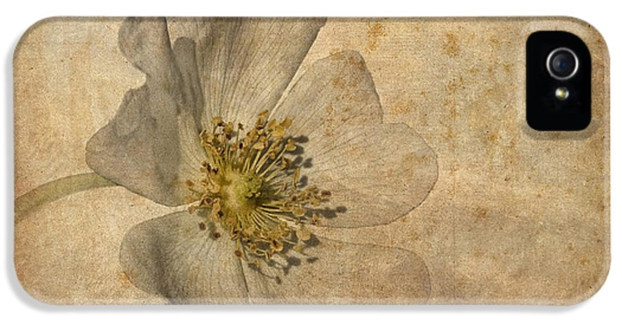 Dog Rose IPhone 5 Case featuring the photograph Impression by John Edwards