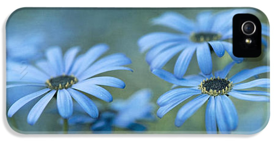 Garden IPhone 5 Case featuring the photograph In A Corner Of A Garden by Priska Wettstein