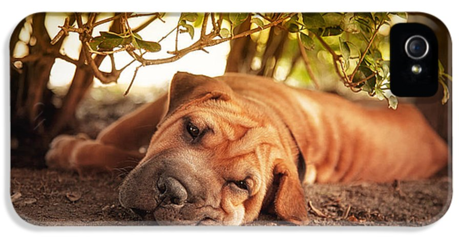 Dog IPhone 5 Case featuring the photograph In The Shade by Jane Rix