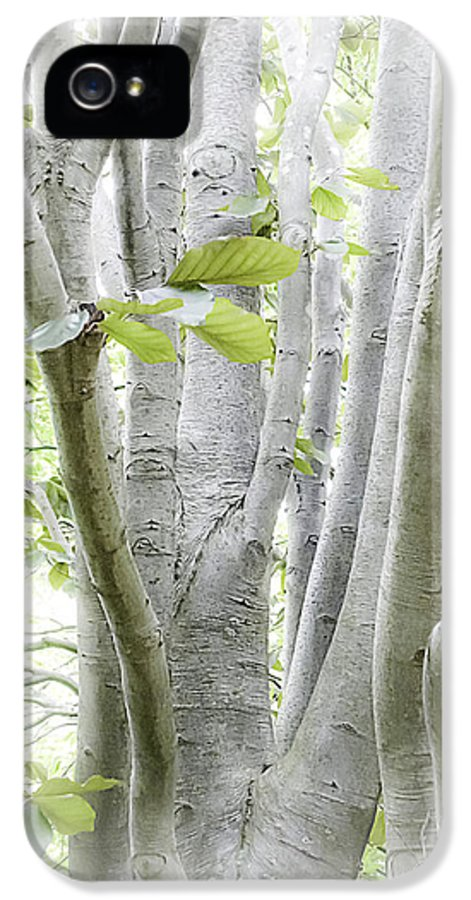 Woods IPhone 5 Case featuring the photograph In The Woods by Julie Palencia