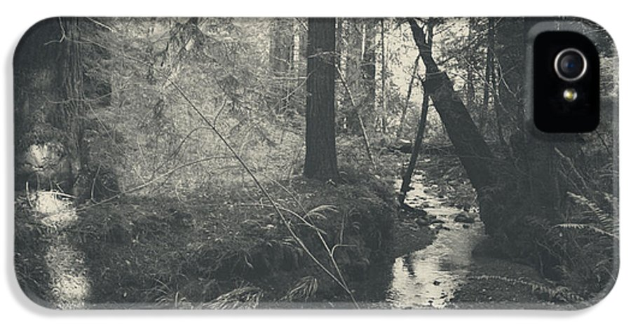 Purisima Creek Redwoods Open Space Preserve IPhone 5 Case featuring the photograph In This Silence by Laurie Search