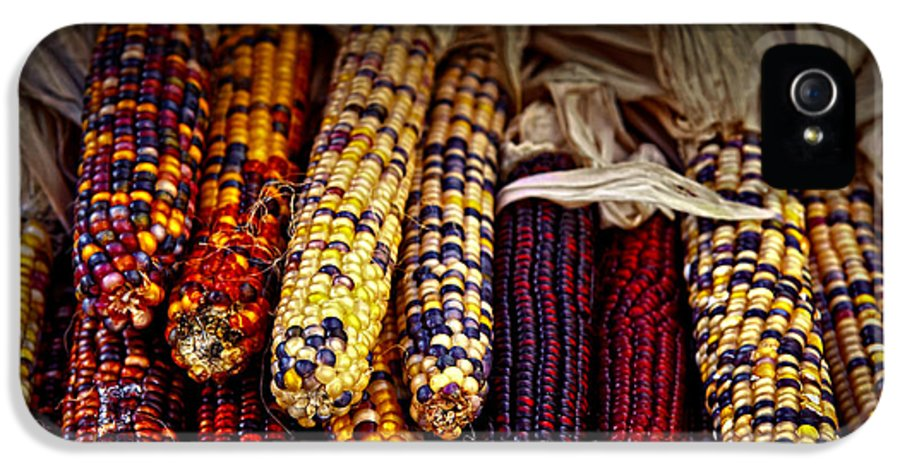 Corn IPhone 5 Case featuring the photograph Indian Corn by Elena Elisseeva