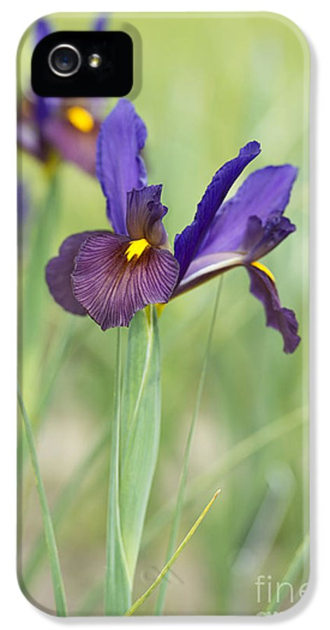 Dutch Iris IPhone 5 Case featuring the photograph Iris Hollandica 'eye Of The Tiger' by Tim Gainey