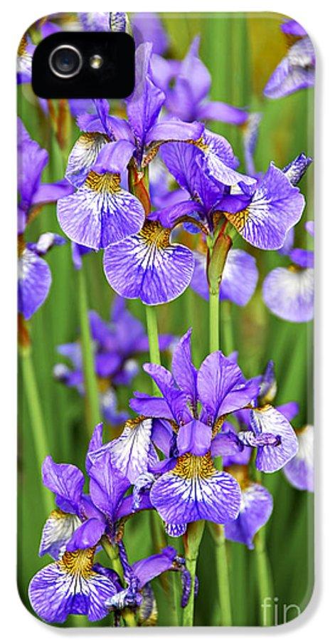 Iris IPhone 5 Case featuring the photograph Irises by Elena Elisseeva