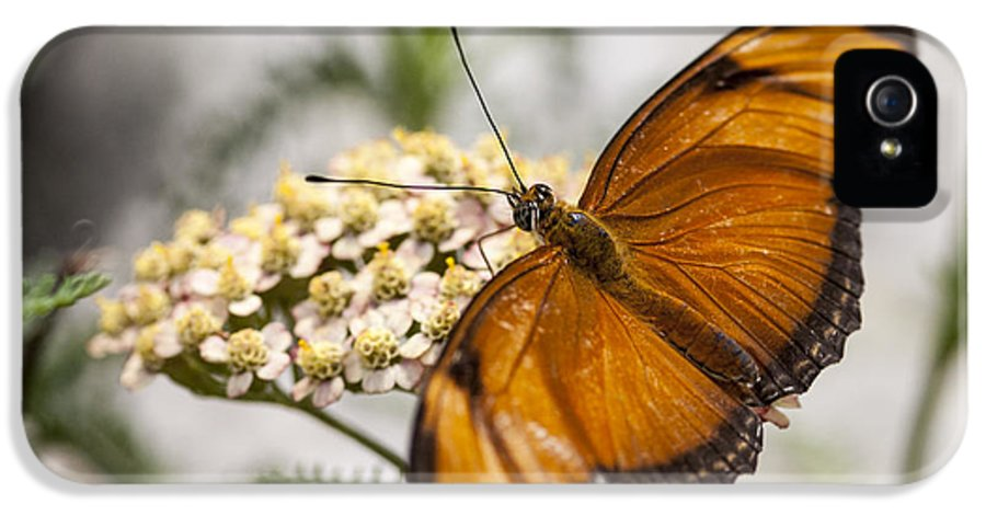 3scape Photos IPhone 5 Case featuring the photograph Julia Butterfly by Adam Romanowicz