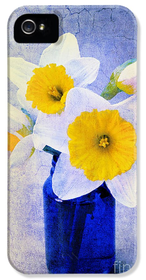 Daffodil IPhone 5 Case featuring the photograph Just Plain Daffy 2 In Blue - Flora - Spring - Daffodil - Narcissus - Jonquil by Andee Design