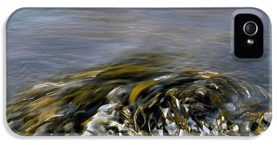 Kelp IPhone 5 Case featuring the photograph Kelp In Sea by IB Photo