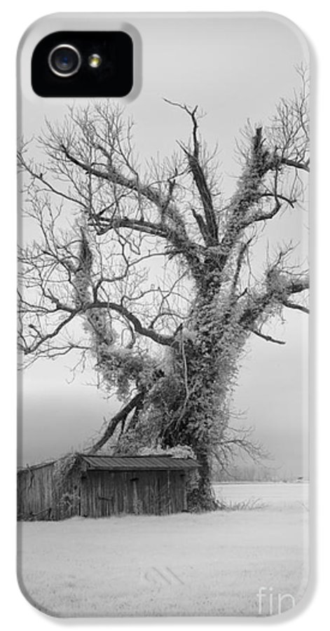 Outer Banks IPhone 5 Case featuring the photograph Killer Tree - Outer Banks by Dan Carmichael