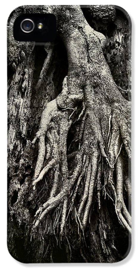 Tree IPhone 5 / 5s Case featuring the photograph Kneeling At The Feet Of The Green Man by Rebecca Sherman