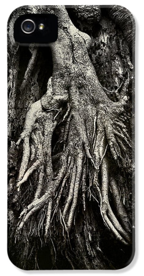 Tree IPhone 5 Case featuring the photograph Kneeling At The Feet Of The Green Man by Rebecca Sherman