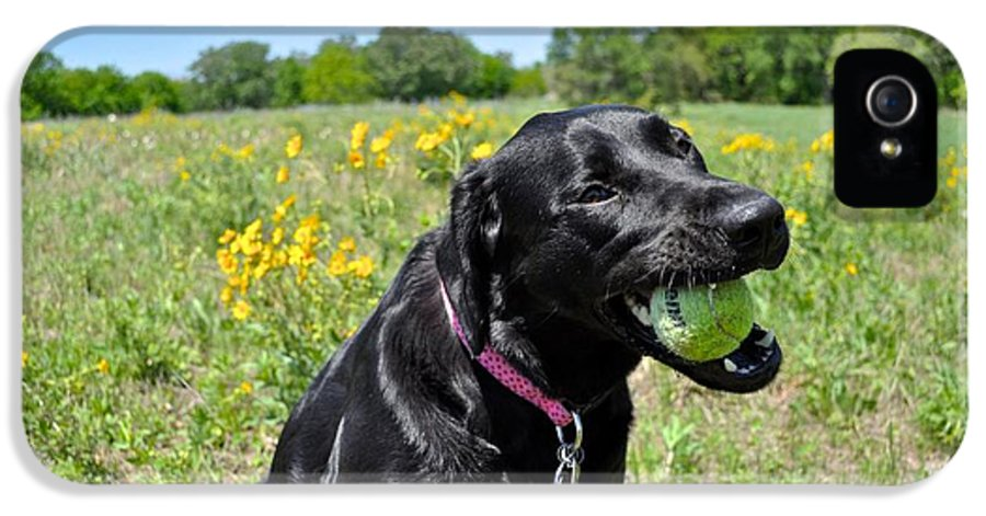 Black Lab Photograph IPhone 5 Case featuring the photograph Lab With A Tennis Ball by Kristina Deane