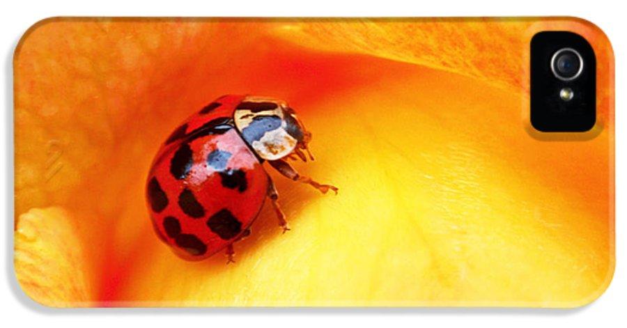 Ladybug IPhone 5 Case featuring the photograph Ladybug by Rona Black