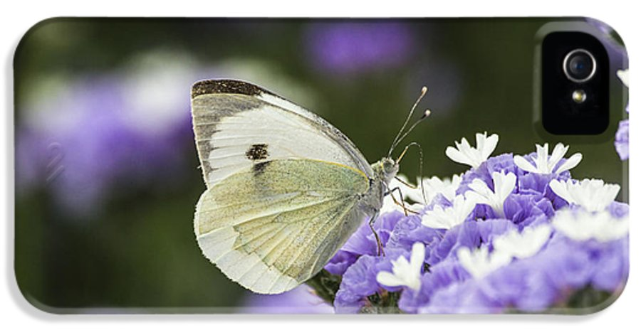 Large White IPhone 5 Case featuring the photograph Large White Pieris Brassicae by Eyal Bartov