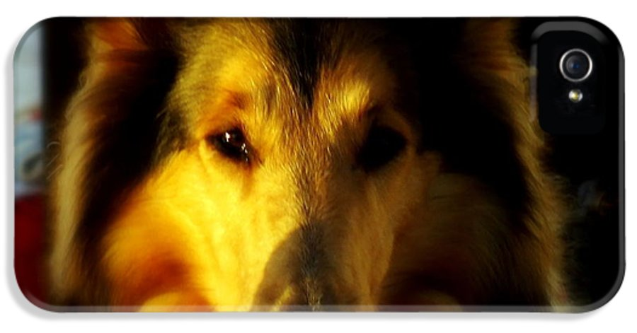 Dogs IPhone 5 Case featuring the photograph Lassie Come Home by Karen Wiles