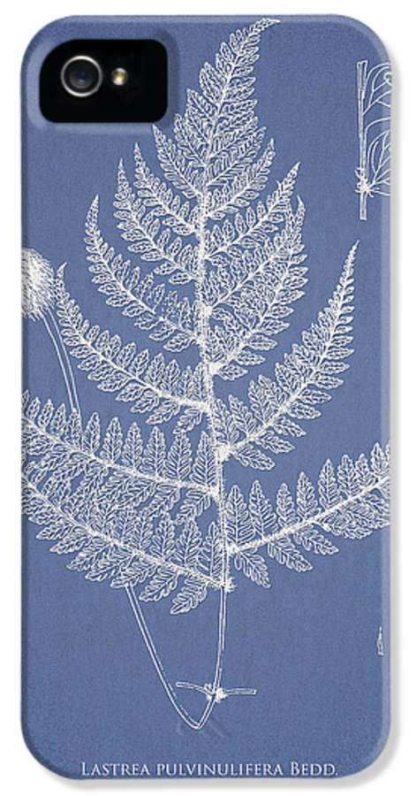 Fern IPhone 5 Case featuring the drawing Lastrea Pulvinulifera by Aged Pixel