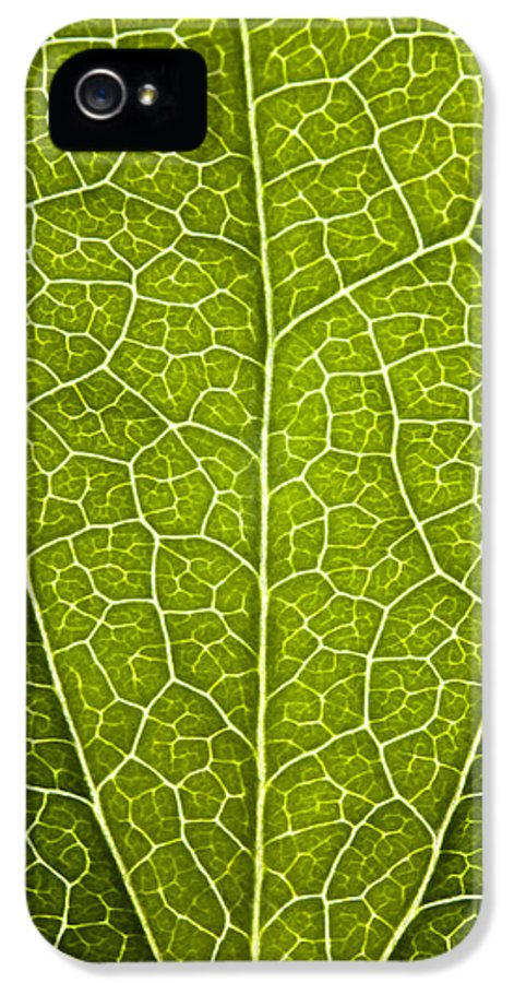 Leaf IPhone 5 Case featuring the photograph Leaf Lines V by Natalie Kinnear